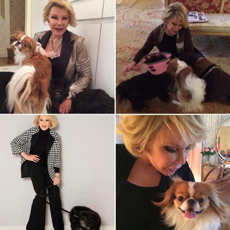 En la cuenta de Instagram de la comediante que permanece activa, coleccionó los mejores momentos junto a sus perros.