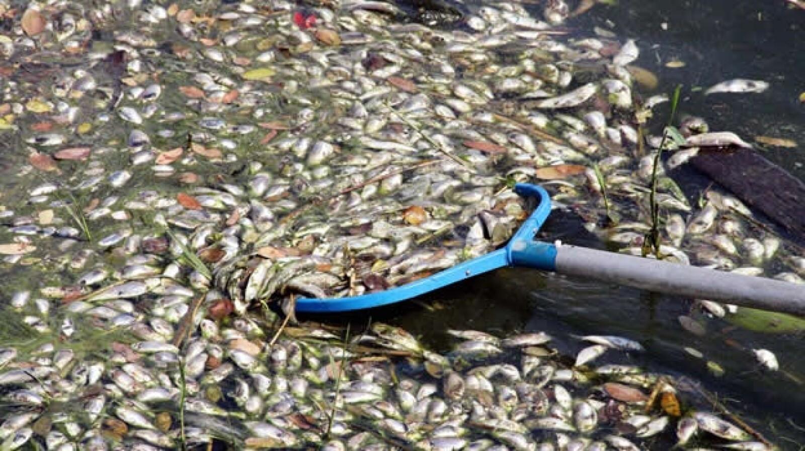peces muertos veracruz