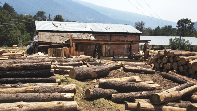 Recuperar los bosques para vivir