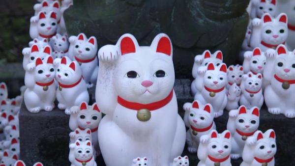 En Tokio, este templo de 'gatos de la suerte' atrae a 'instagramers' del mundo