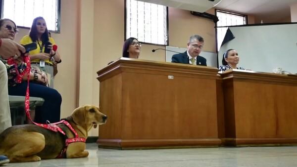 Un perro asiste a juicio como víctima de maltrato por primera vez en América