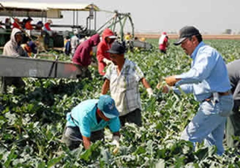 Los 1 millón 850,000 trabajadores ilegales de California son el grupo más numeroso en la nación. (Foto: AP)