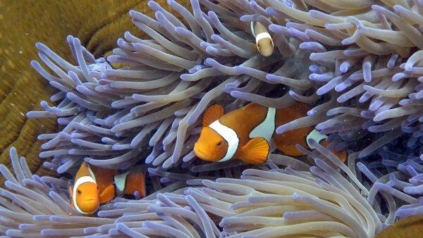 La Gran Barrera de Coral australiana se extiende sobre unos 345,000 kilómetros cuadrados.