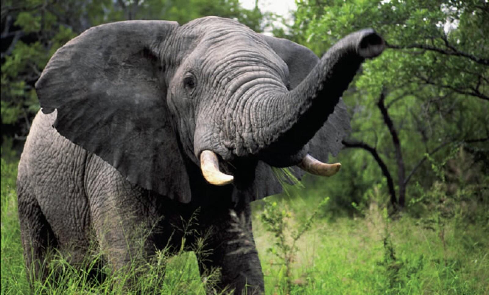 La Reserva Nacional del Kruger alberga más de 500 especies de aves y de 147 especies de mamíferos y es la reserva natural más grande de Sudáfrica.