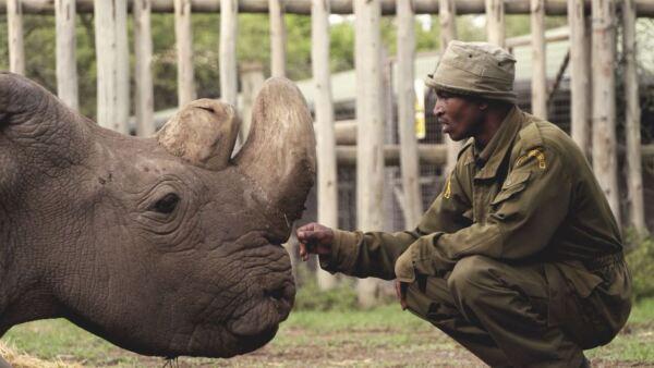 Rinoceronte