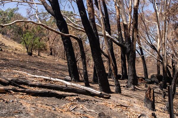 Bushfires in Australia - 17 Jan 2020