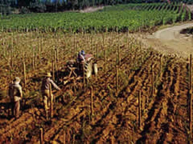 Los viñedos chilenos exportan más a México gracias al TLC, pero las bodegas argentinas están abriendo brecha en el mercado. (Foto: Especial)