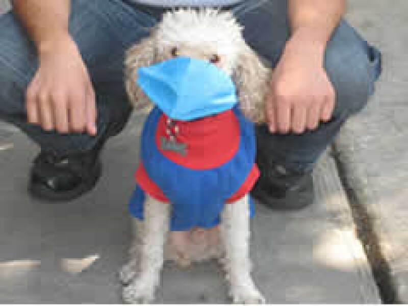 Los perros y gatos no se contagian del virus de la influenza. (Foto: Verónica Galán)