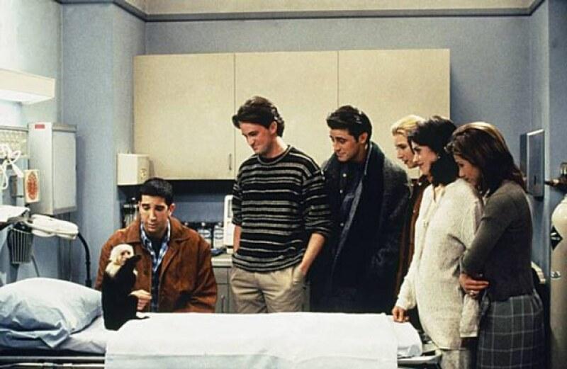 Tras su primer aparición en Friends, Marcel se convirtió en uno de los preferidos de la serie.