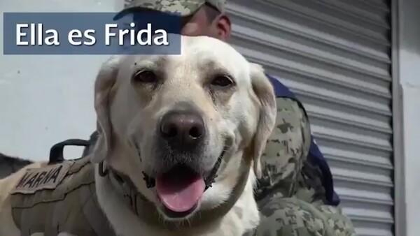 Frida, la perrita de la Secretaría de Marina que salva vidas tras el sismo