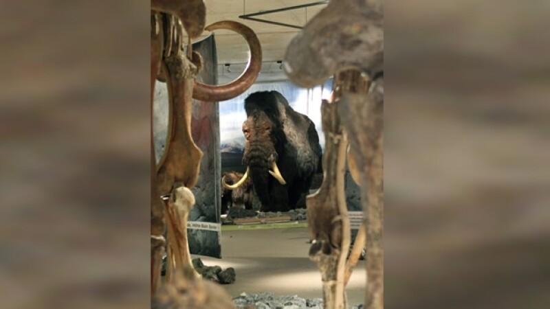 mamut a escala real reconstruido