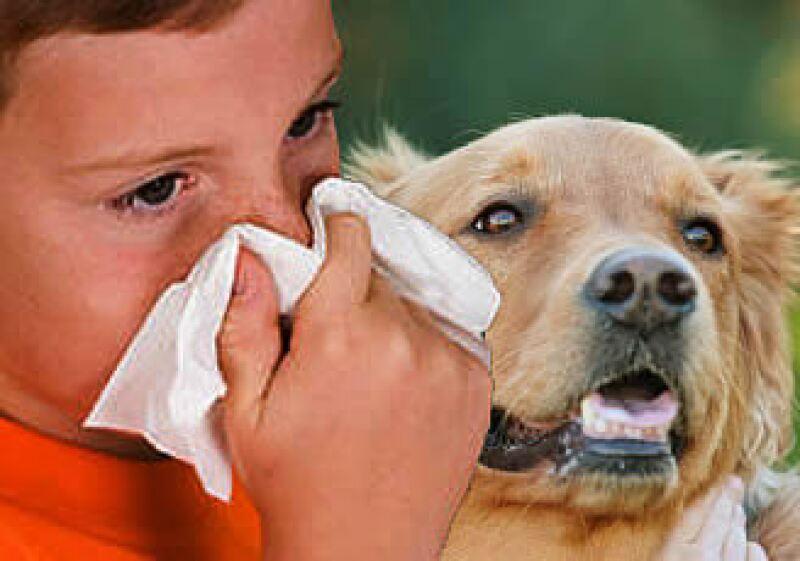 Los niños son los más susceptibles de contagiarse por el contacto con mascotas mal cuidadas.  (Foto: FOTOARTE: Jorge Márquez)