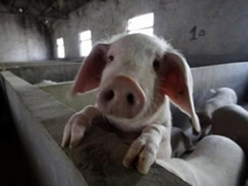 La carnde de cerdo mexicana tendrá que esperar para entrar a China (Foto: Archivo)