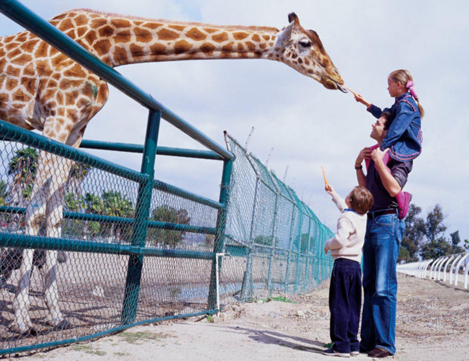El doctor Campos, veterinario del lugar, nos dijo en ese entonces que había más de 54 especies de mamíferos en el zoológico.