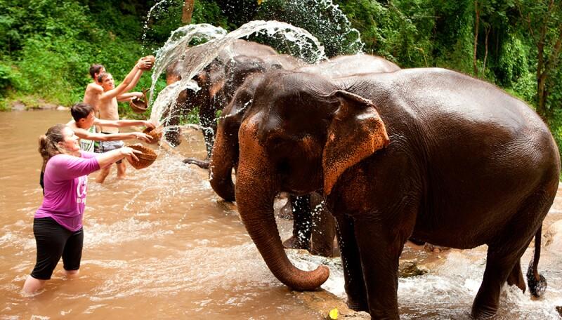 Turismo para salvar elefantes
