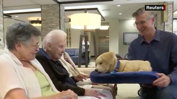 Tombot, el cachorro robot para pacientes de Alzheimer