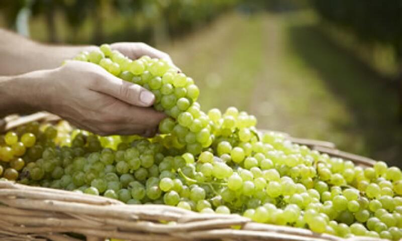 Los agricultores estiman que la calidad del vino será buena, a pesar de la escasa cosecha de uva. (Foto: Getty Images)