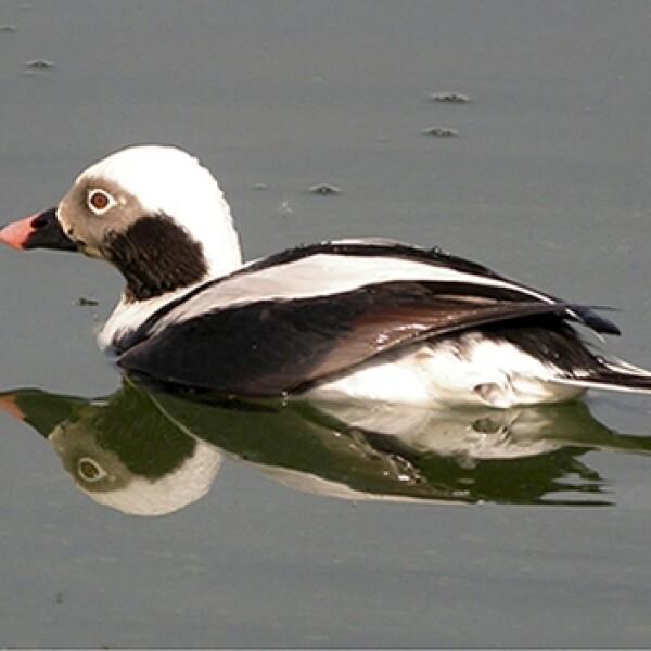 Amazonas aves especies amenazadas 04