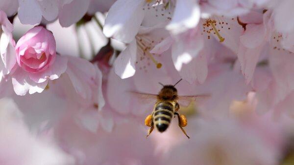 De 1999 a 2014, 921 personas murieron en Estados Unidos tras encuentros con avispones, avispas o abejas.