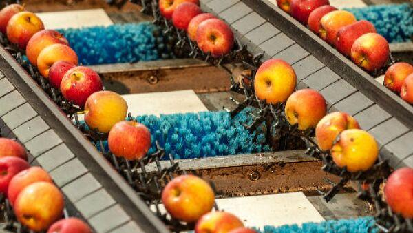 empacadora de manzanas