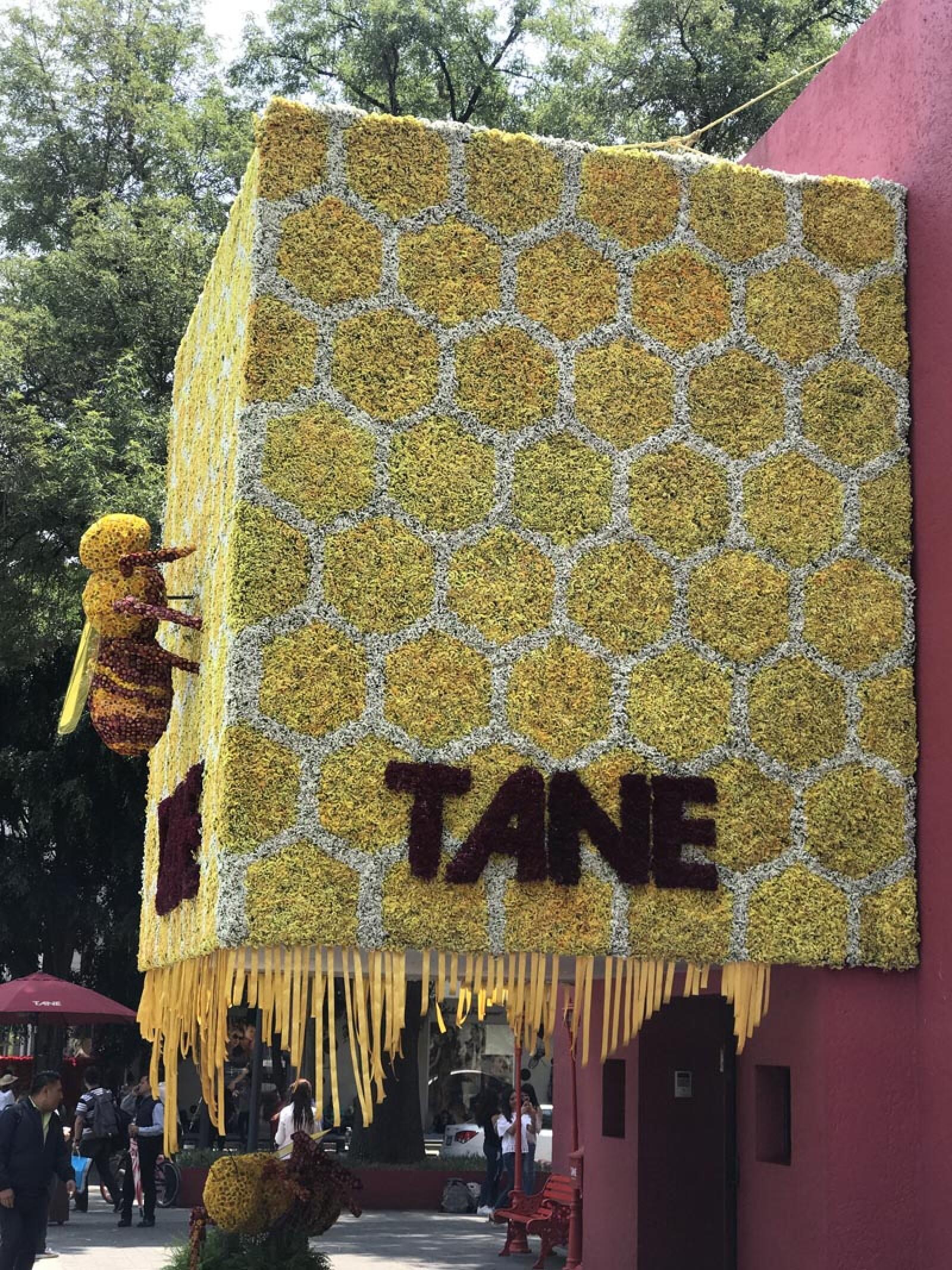 Tane-Polanco-En-Flores