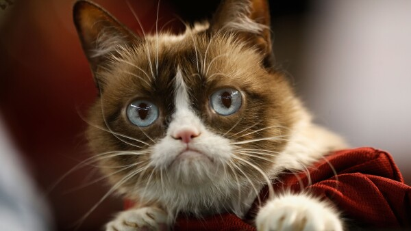Internet net star Grumpy Cat dies at age of seven