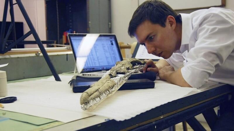 Un investigador analiza uno de los huesos fosilizados de las alas del ave marina más grande de la historia
