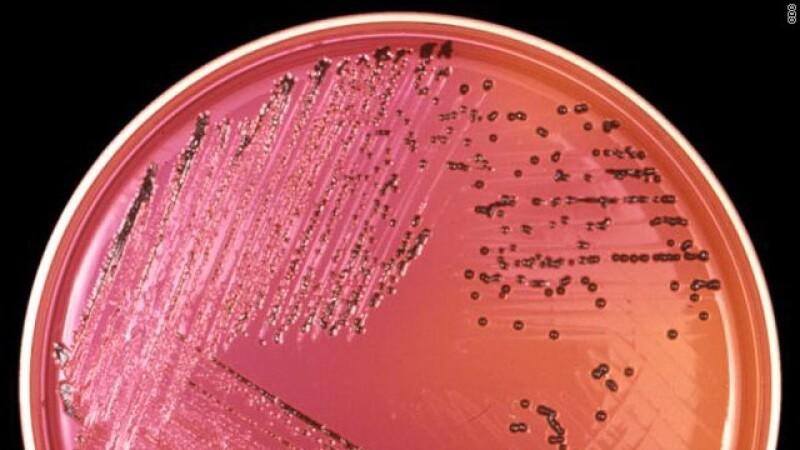 bacteria salmonela