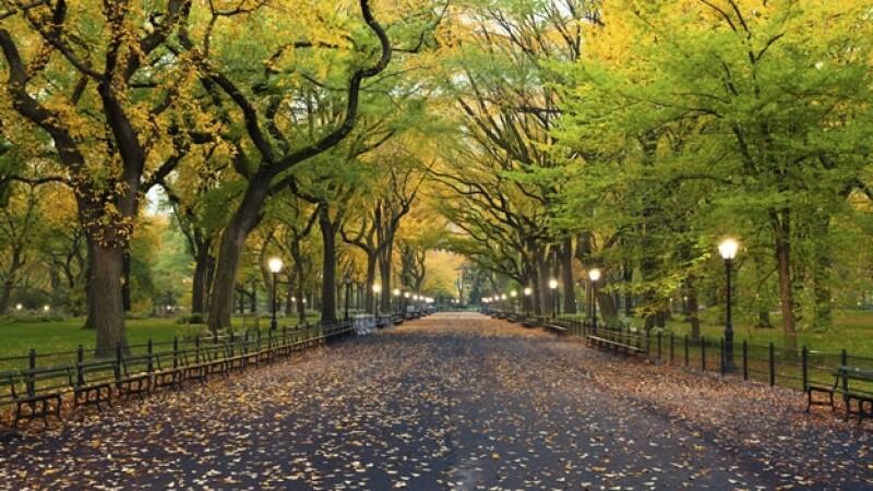 Central Park de Nueva York, donde fue encontrado muerto un cachorro de oso este lunes