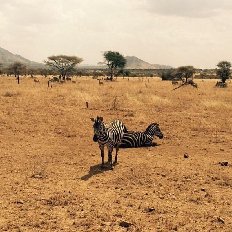 Hey zebra. #Vcation #Africa