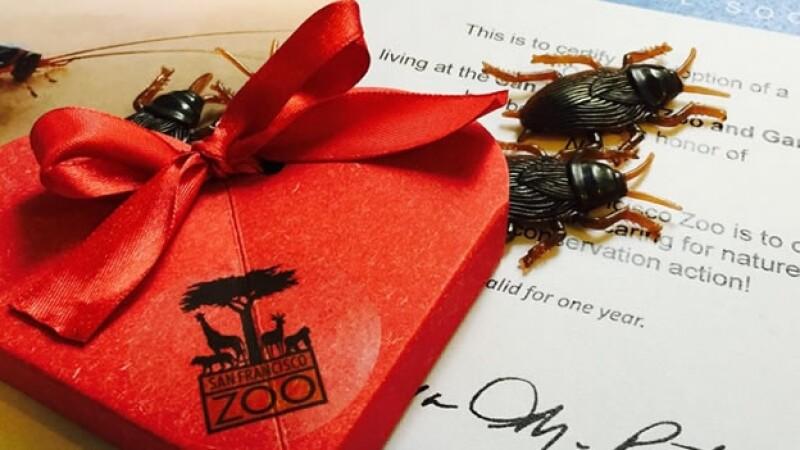 Las cucarachas gigantes de Madagascar, un regalo ideal para tu ex, según la sugerencia del Zoológico de San Francisco