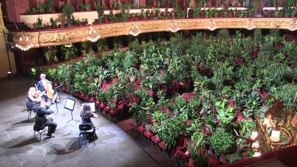 Este concierto para plantas retrata la ausencia de humanos durante la epidemia