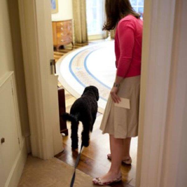 El perro de la familia Obama, Bo, entrando a la Oficina Oval.