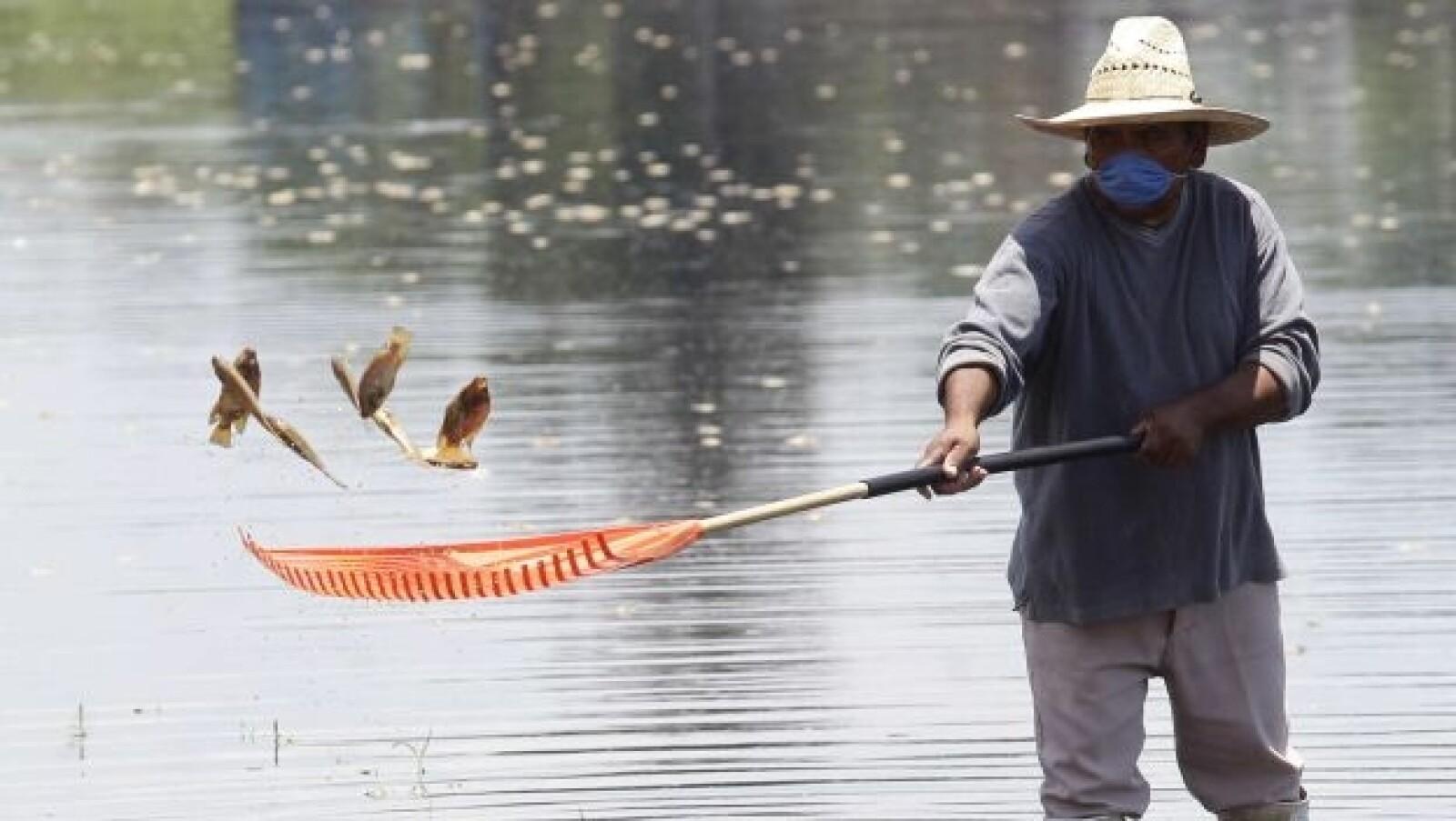 peces muerto en la presa hurtado