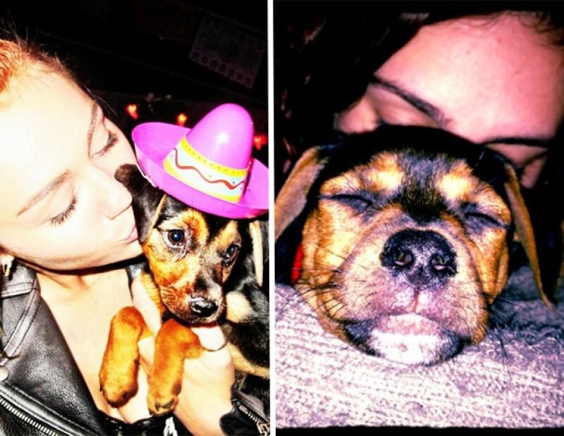 Miley y Rumer adoptaron a uno de los cachorros abandonados.