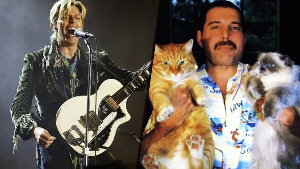 famosos inspirados por gatos