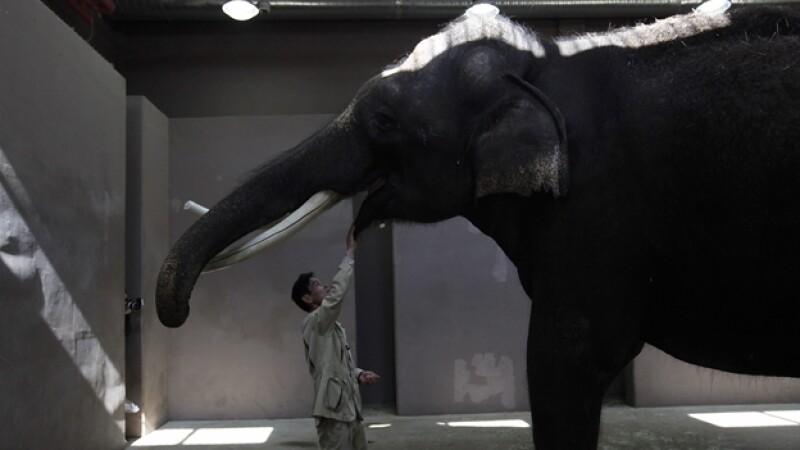 Elefante, coreano, habla.