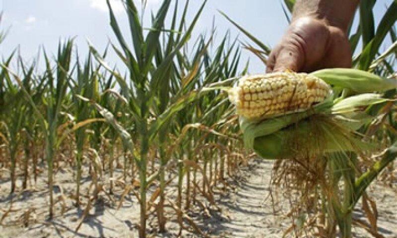 Entre 86 y 95% de los cultivos que han sido afectados por un alza en los precios eran producidos por los países del G20.  (Foto: AP)