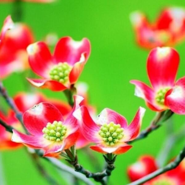 irpt-flores9