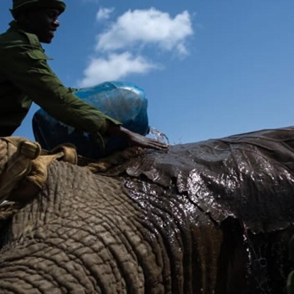 Traslado de elefante en Kenya