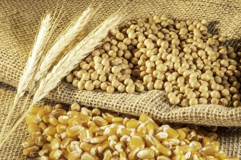 Las empresas hacen frente al aumento en el precio del trigo, la soya y el maíz. (iStock)