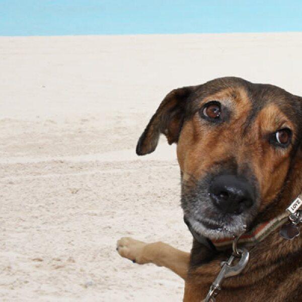 Los voluntarios donan una cantidad de 465 pesos, que es destinada a la manutención y atención médica de los caninos de la zona.