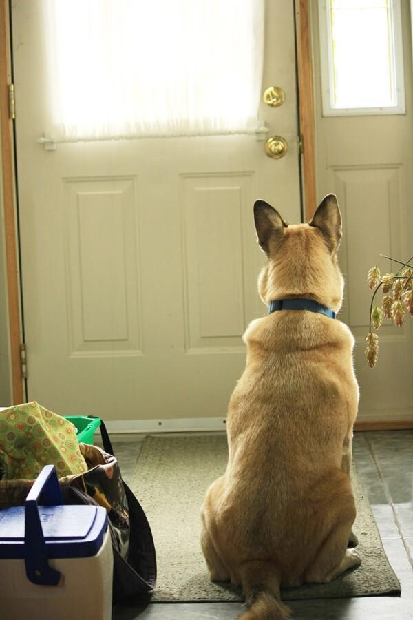 perro-perrito-mascota-cuarentena-coronavirus-2