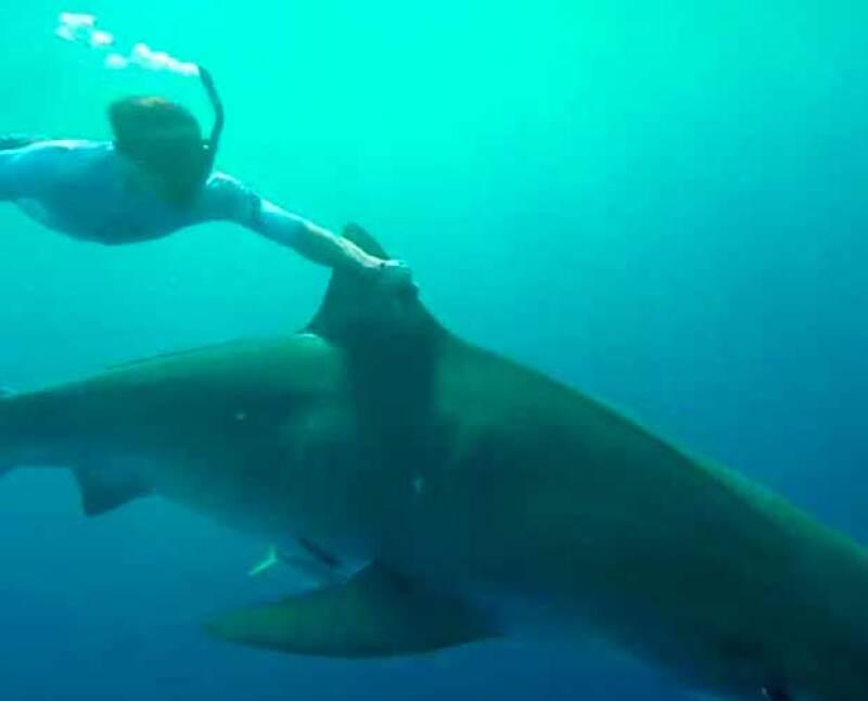 Sin temor, Zac tomó la aleta de un tiburón y se dejó llevar por él.