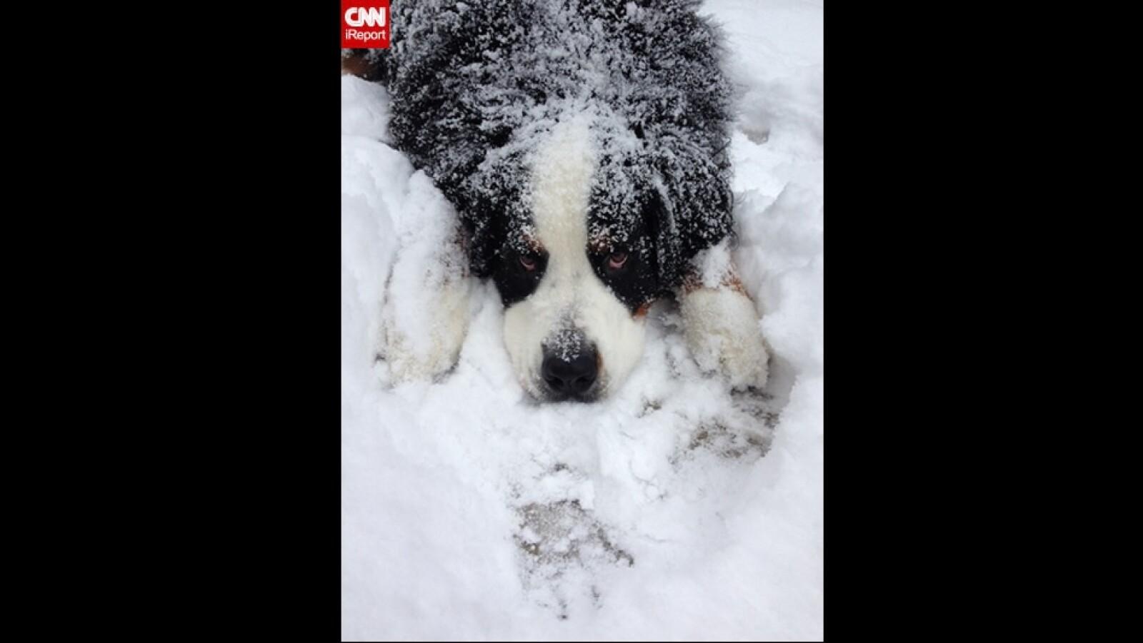 ireport mascotas nieve EU 11