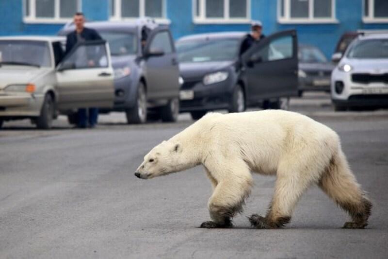 RUSSIA-ANIMAL-ENVIRONMENT