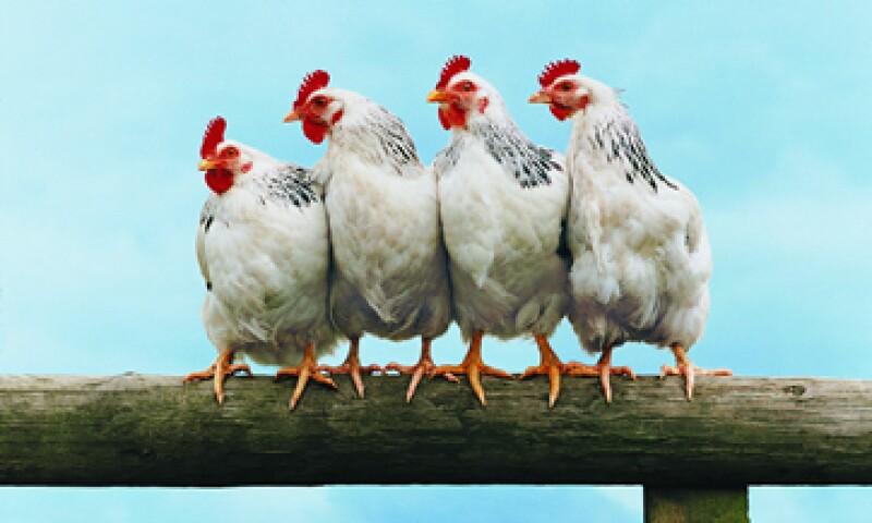 La influenza aviar es una enfermedad de notificación obligatoria. (Foto: Getty Images)