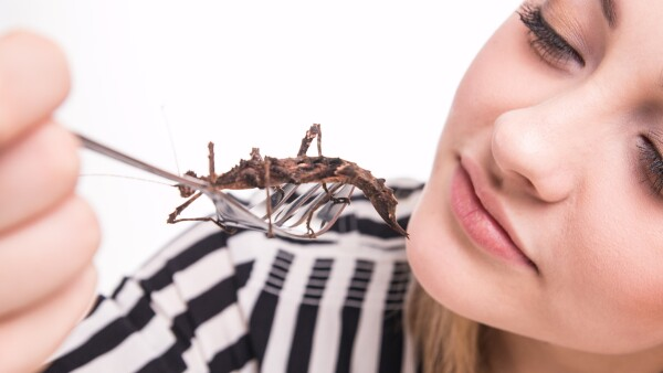 Insectos como comida