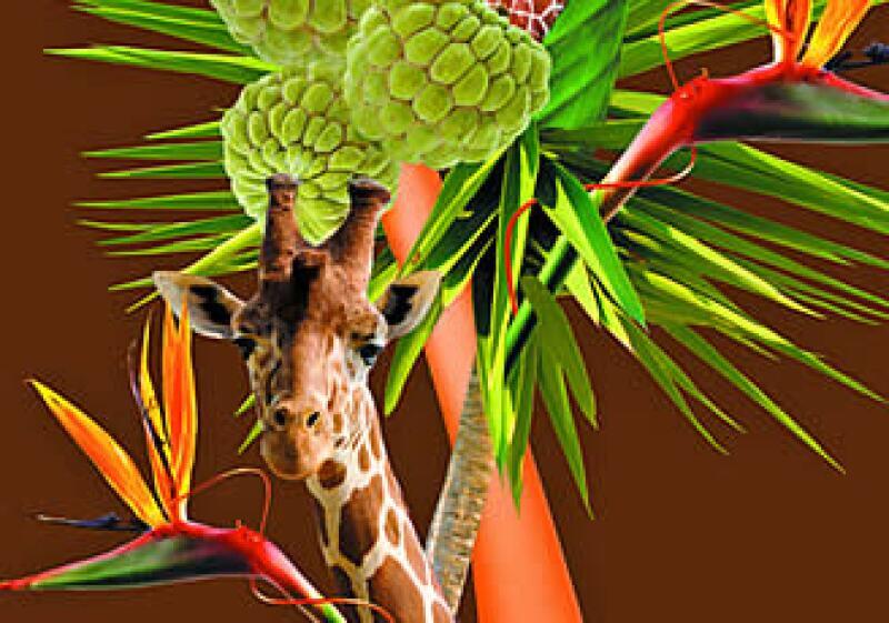 Lo mejor de la naturaleza se extrae para crear productos innovadores. (Foto: Cortesía Fruits & Passion)