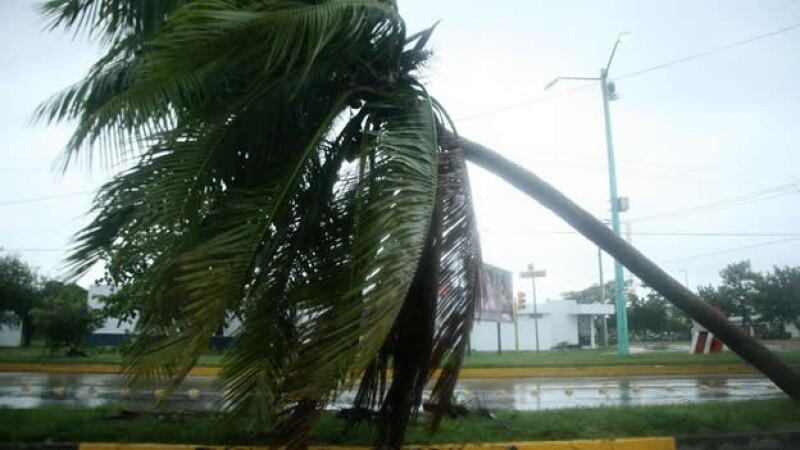 palmeras tormenta